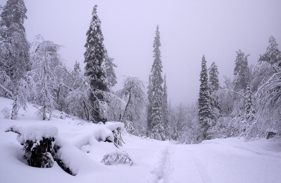 В Леви зимой сказочно красиво. Из этой фотографии мы сделали обои для рабочего стола