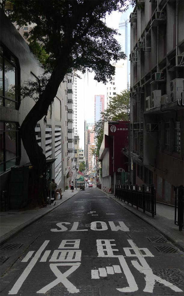 Дерево в Гонконге