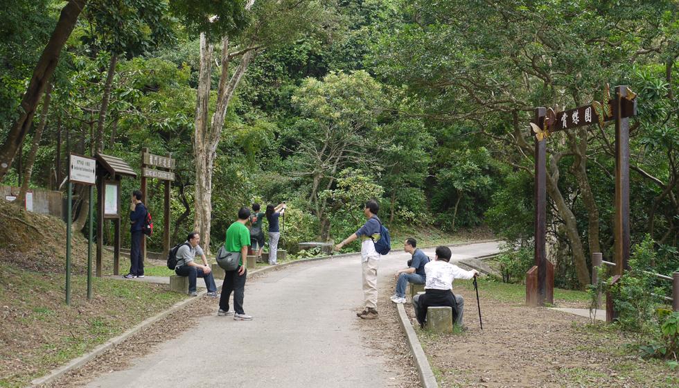 Туристы фоткают лес