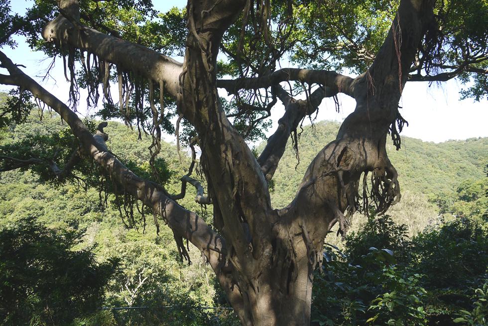 Дерево на маршруте
