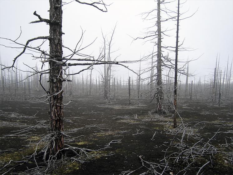 Мертвый лес, последствие извержения вулкана