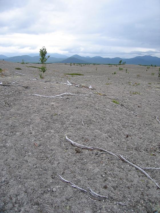 Пемзовое поле в районе вулкана Ксудач. Поверхность покрыта ягелем, который едят олени.