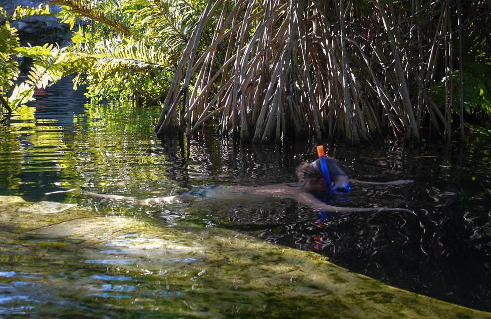 Сквозь мангровые заросли