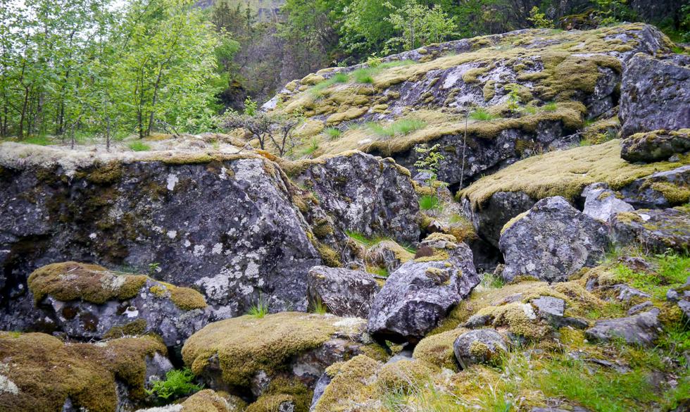Лесные мхи Норвегии