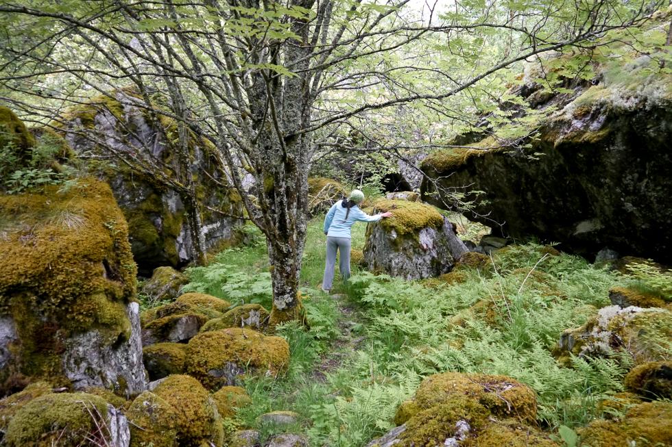 Прогулка по Норвежскому лесу