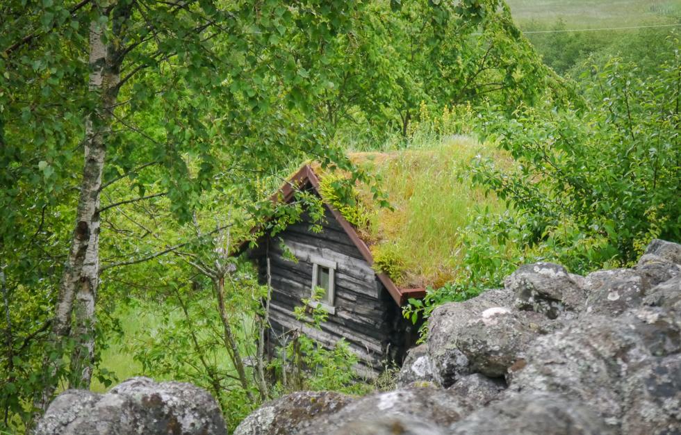 Домик с заросшей крышей
