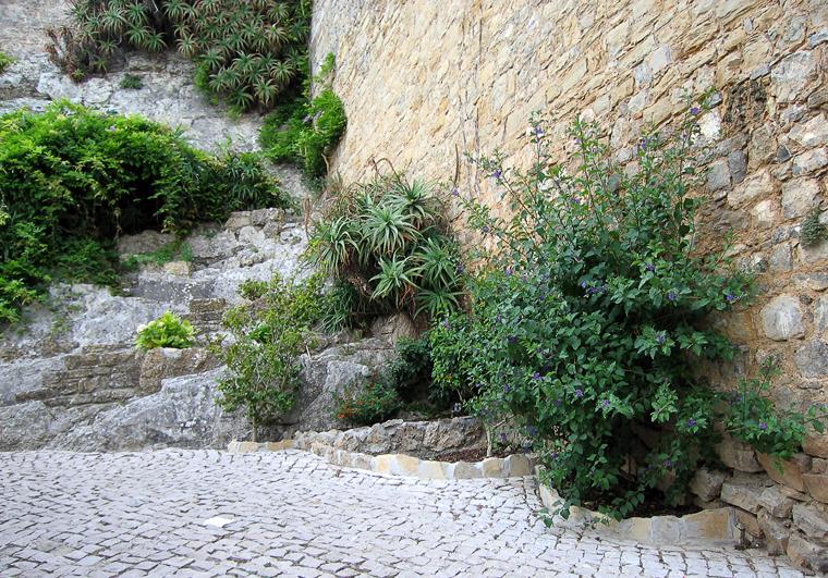 Городское озеленение Обидуша