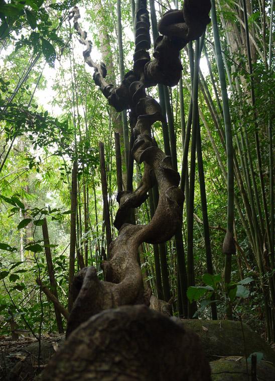 Растение в Као-Камао