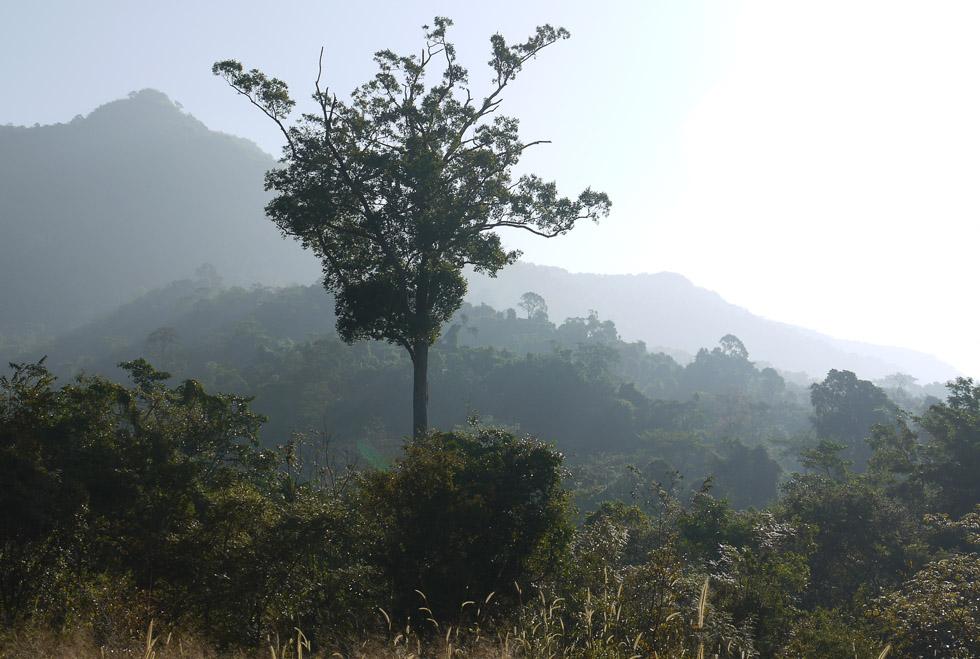 Вечнозеленый лес в национальном парке Као Яй