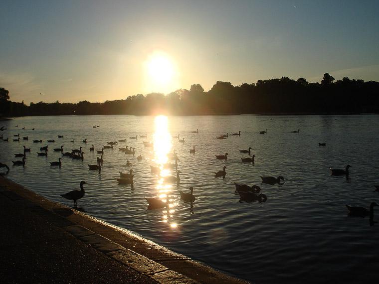 Пруд в Гайд-парке, где живут лебеди