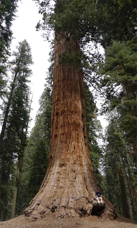 И это дерево никак не называется. Опытный путешественник присел на выступающую часть коры. Забраться туда ему помогли невероятная прыгучесть и липучки на пальцах.