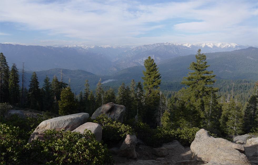 Секвойи растут высоко в горах