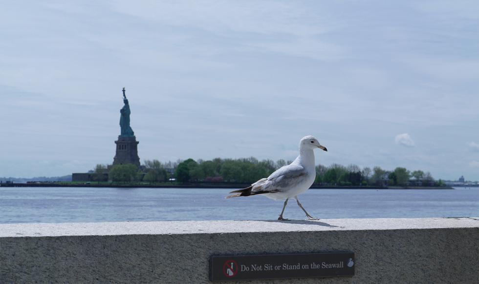 С обратной стороны видно Статую Свободы.