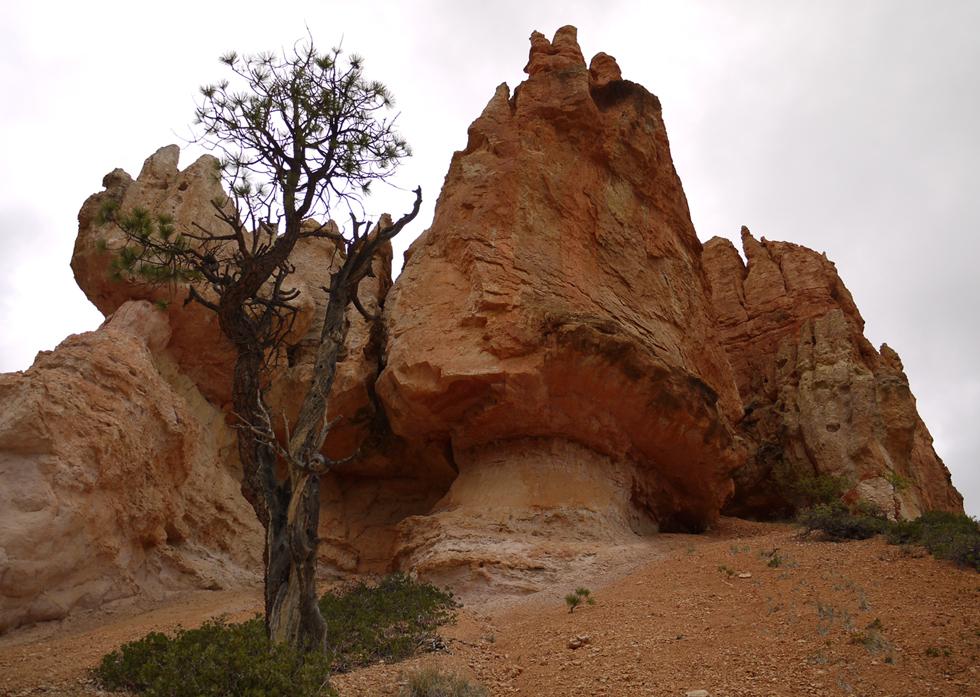 Можно спуститься вниз, побродить между нагромождений камня, как в сказочном лесу.