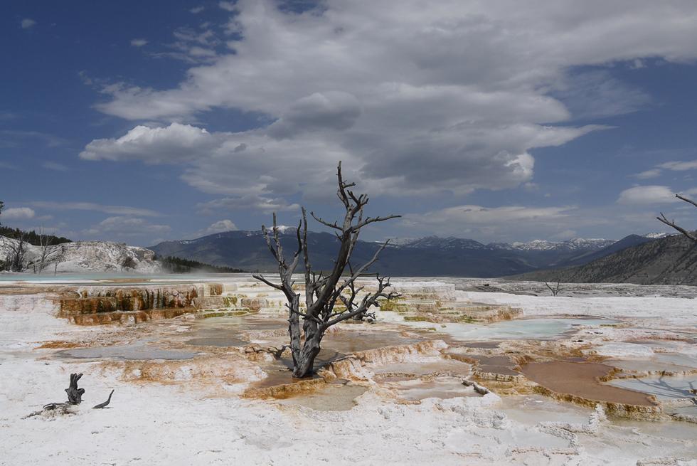 Источники постоянно меняются. Этот, например, строит всё новые террасы. Деревья уcпевают вырасти, но гибнут.