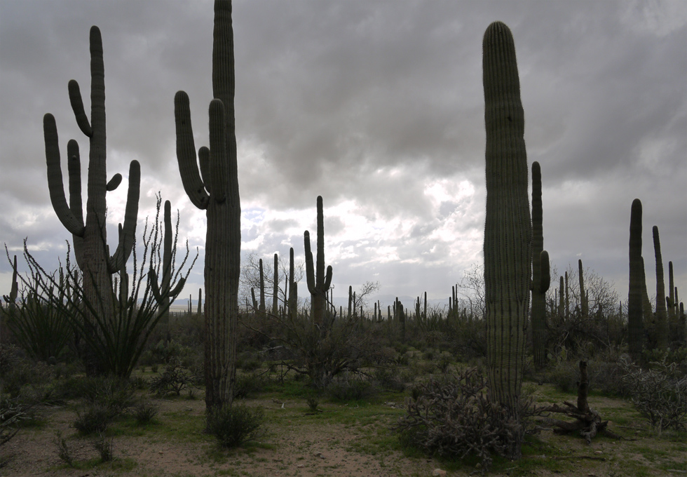 Северная часть национального парка Сагуаро