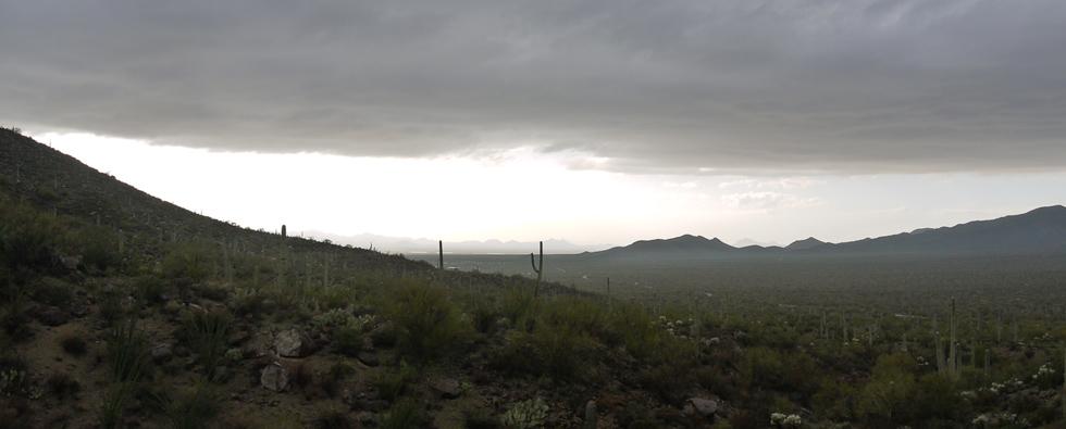 Вид на кактусовую долину