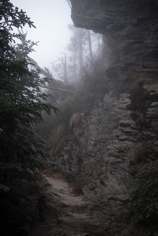 Тропа в тумане