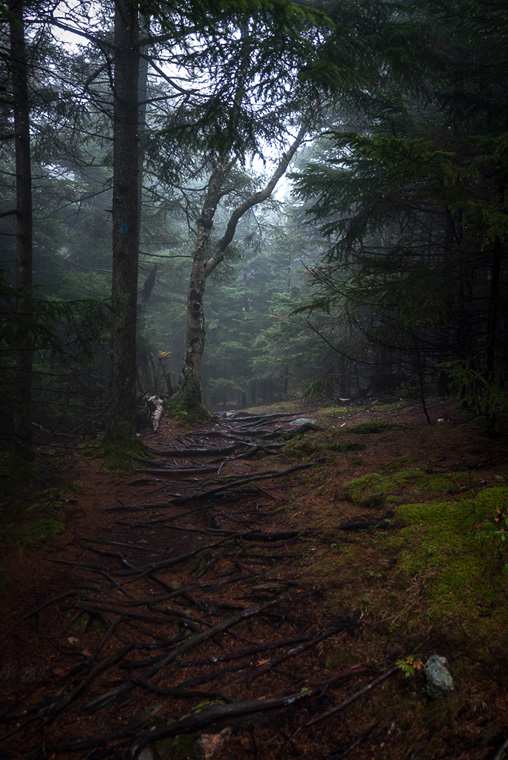 Лес как у нас