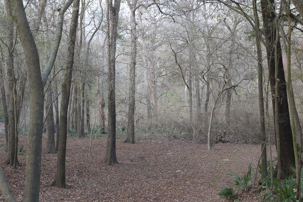 Не картина, а лес