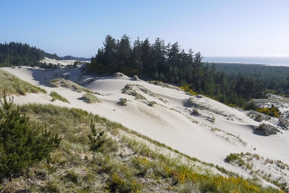 Лесные дюны