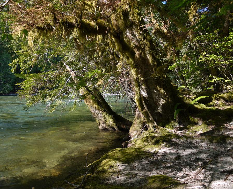 Тропический лес Каскадных гор