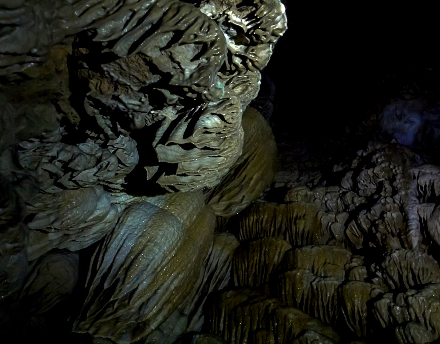 Колония пещерных медуз