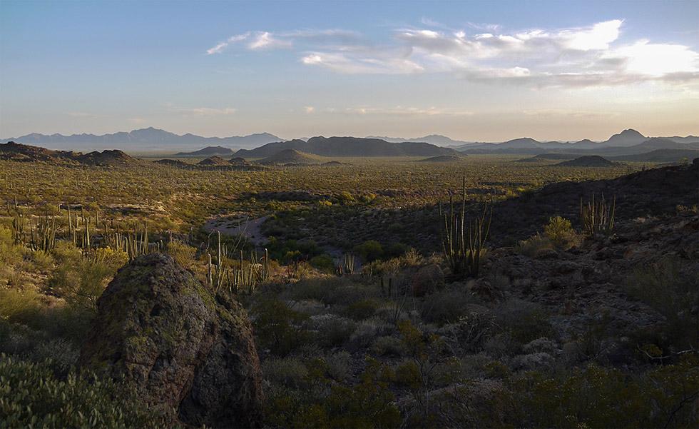 Кактусовая долина