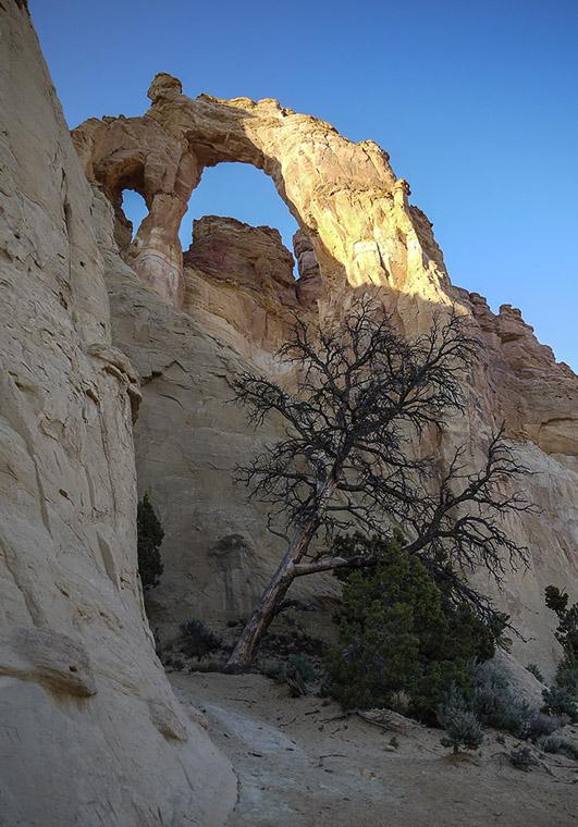 Дерево под аркой