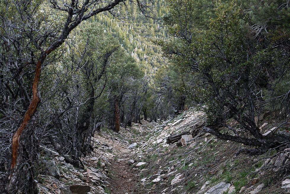 Тропа в горах