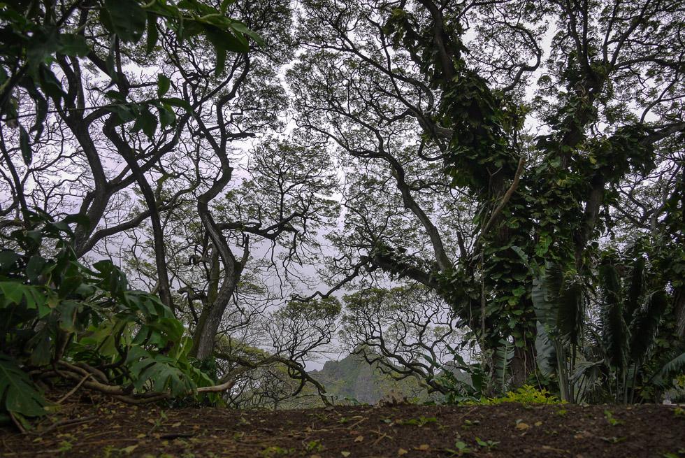 Джунгли на Оаху