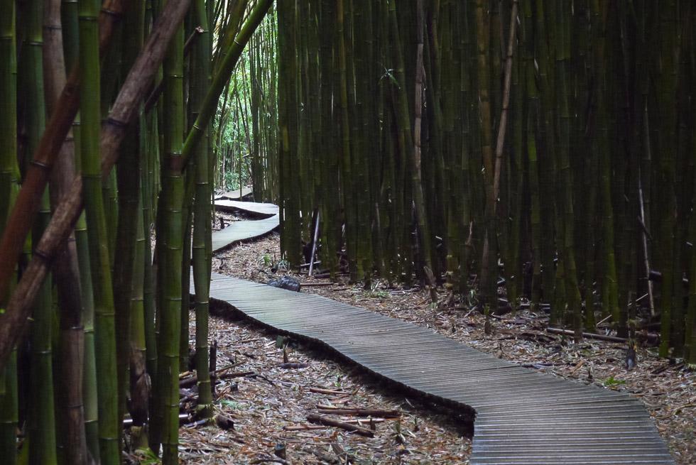 Извилистый настил через бамбуковый лес