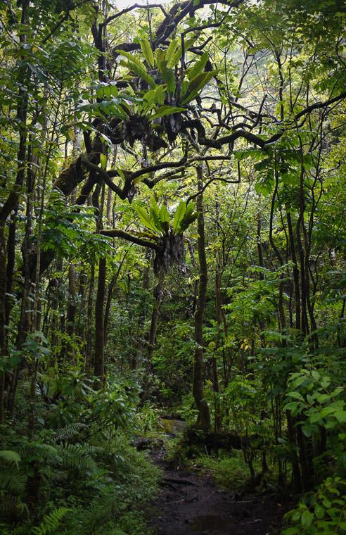 Воздушные корни и лианы