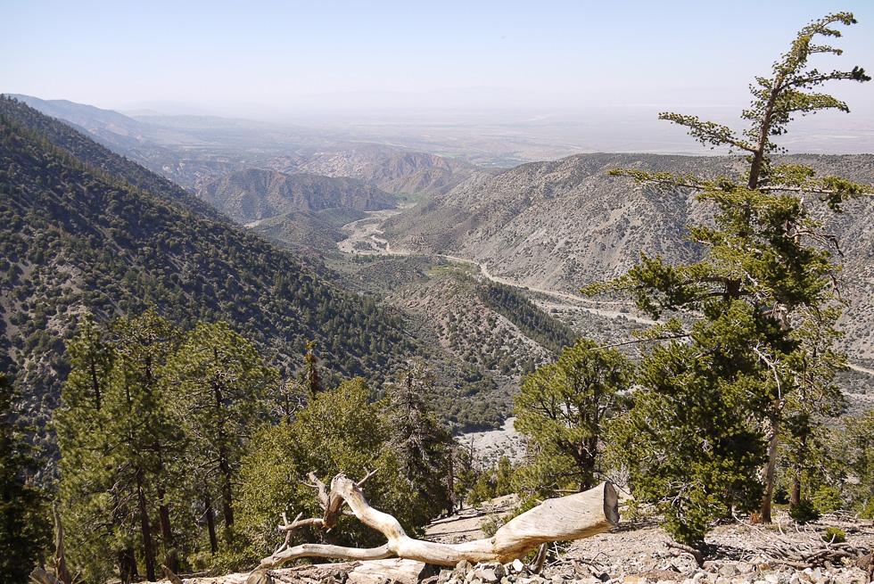 Горный лес к северу от Лос-Анжелеса