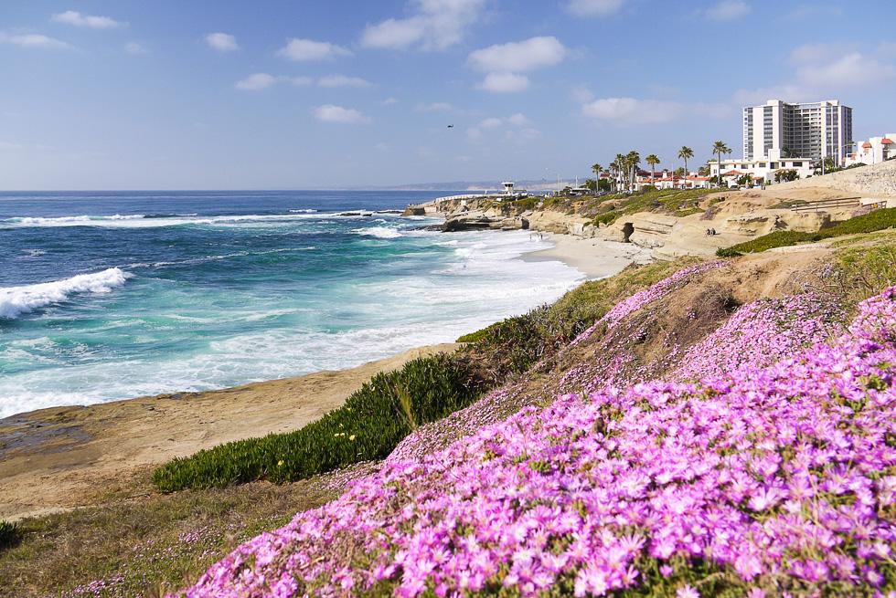 Цветы на берегах моря
